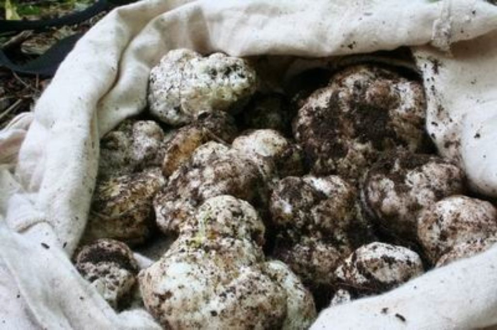 Gerla de Boer Sand truffles